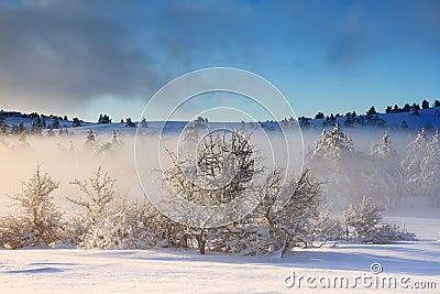 Misty sunrise in winter