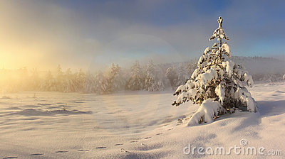 Misty sunrise in winter