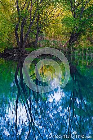 Misty Swamp Lake