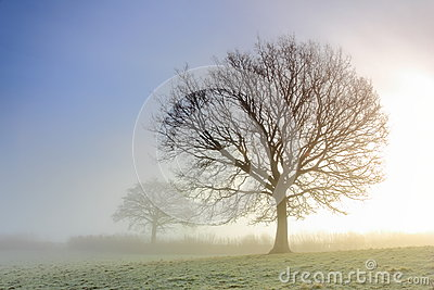 Misty Tree Silhouettes