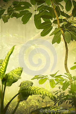 Misty Tropical Jungle Background Scene