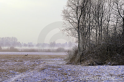 Misty winter field