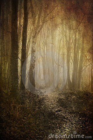 Misty woodland path