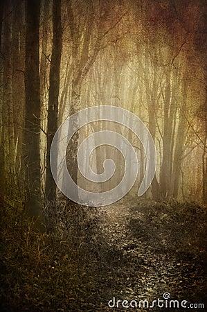 Misty woodland path