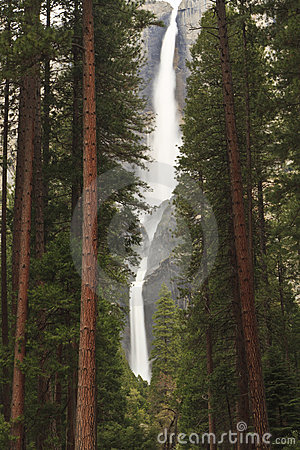 Free Misty Yosemite Falls Through Forest Stock Photos - 19752303