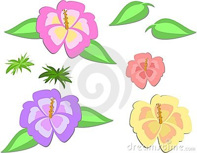 Mix of Hibiscus Flowers and Leaves