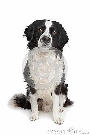 Free Mixed Breed Dog Stock Image - 20729071