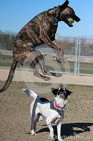 Mixed breed dog jumping with the ball