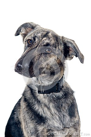 Mixed breed dog portrait