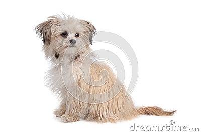 Mixed breed mutt