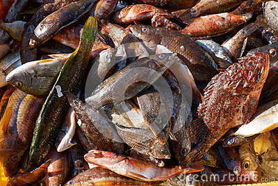 Mixed fish for sale on market