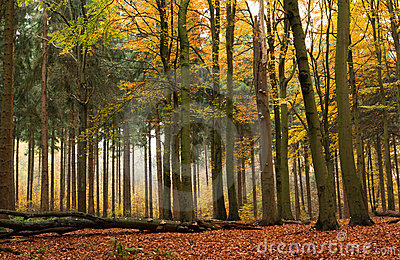 Mixed forest in autumn