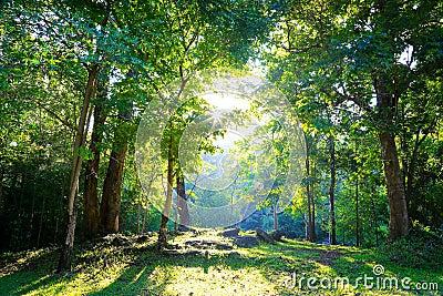 Deciduous Forest In Asia 7