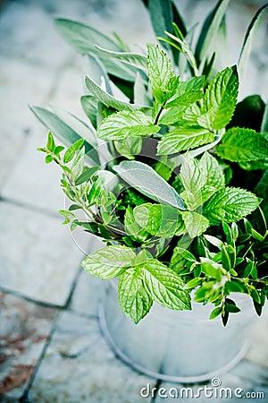 Mixed fresh herbs