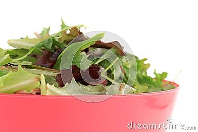 Mixed greens for salad
