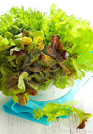 Free Mixed Lettuce In A Bowl Stock Photo - 16722280