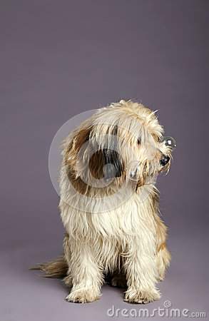 Mixed-Race Dog with Bubbles in Studio