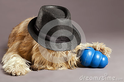 Mixed-Race Dog with Chew Toy in Studio