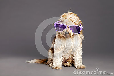Mixed-Race Dog with Purple Glasses in Studio