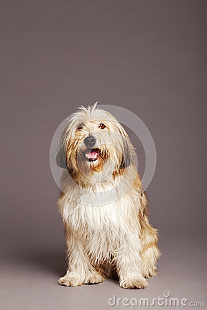 Mixed-Race Dog Studio Portrait