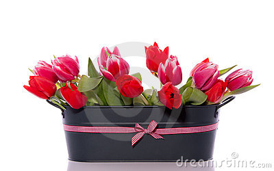 Mixed red pink tulips