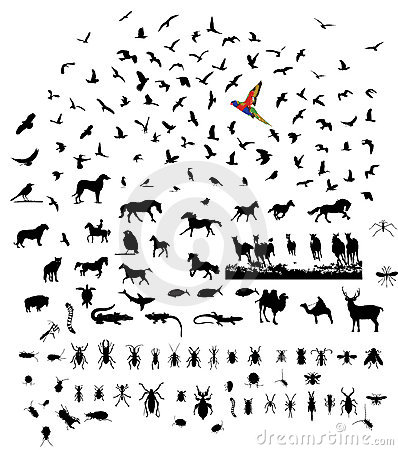 Mixed wild animal silhouettes set