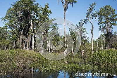 Mixons Hammock panorama Okefenokee Swamp ecosystem
