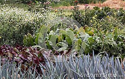 Mixture vegetable garden bed
