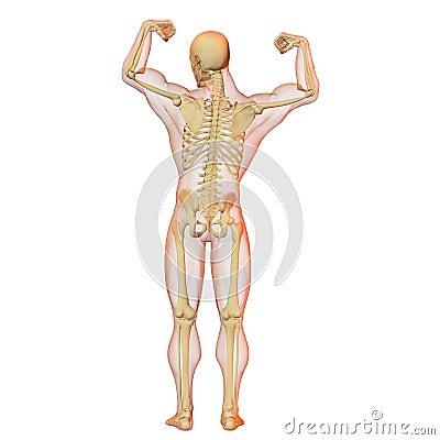 wiki menschliche korper etwas anatomie tutorial