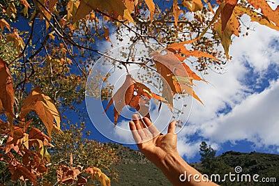 Mão que alcanga para as folhas de outono