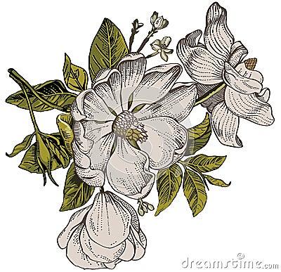 mod le de fleurs r aliste le baroque de vintage dogrose de rose cynorrhodon bruy re wallpaper. Black Bedroom Furniture Sets. Home Design Ideas