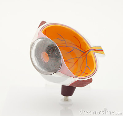 Model of an eye