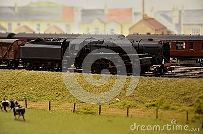 Model train steam engine & coal car with jersey cows