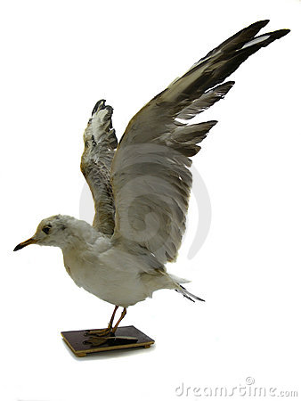 Model of a white seagull