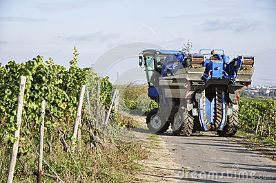 Modern Agricultur, wine harvesting
