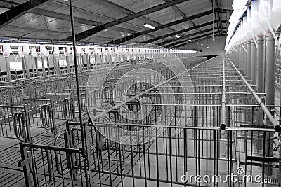 Modern breeding pig farm