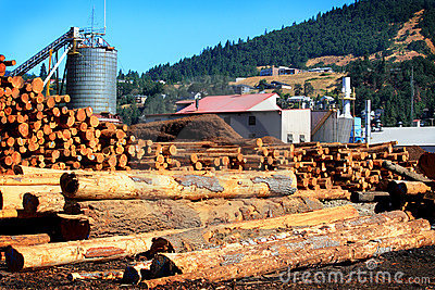 Modern Busy Sawmill
