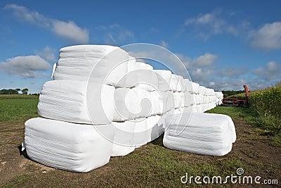Modern Dairy Farm Hay Bales in Plastic Bags