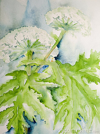 Free Modern Watercolor Painting Of The Giant Hog Weed Stock Photos - 22592793