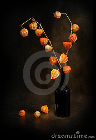 Free Modest Still-life In Black Tones Royalty Free Stock Photo - 8798235