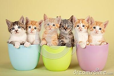 Moggie kittens