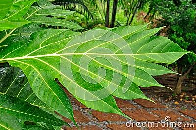 Mokry ogrodowy liść