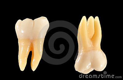 Molar teeth isolated on black