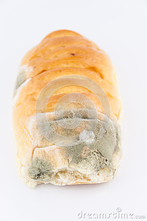 Mold on bread