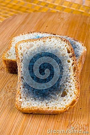 Free Moldy Bread Royalty Free Stock Photos - 31567478