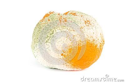 Moldy orange isolated on white