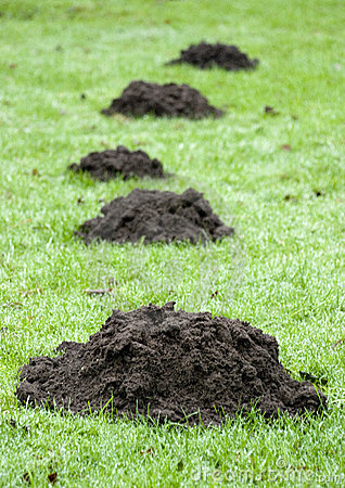 Free Mole Hill Royalty Free Stock Photos - 5575488