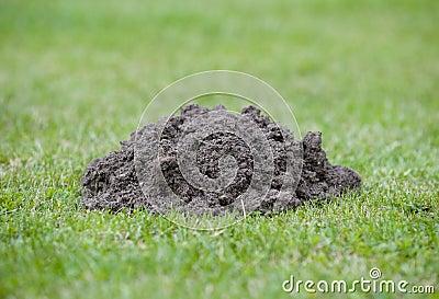 Mole hill in garden closeup