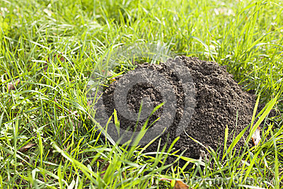 Mole s hole