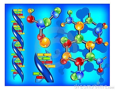 Molecule of DNA
